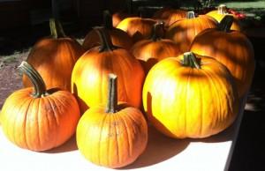 MLF pumpkin 1