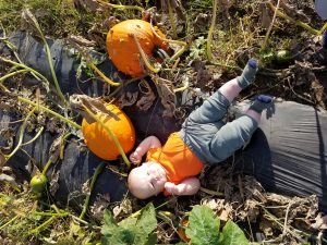 wagle-baby-in-pumpkin-patch