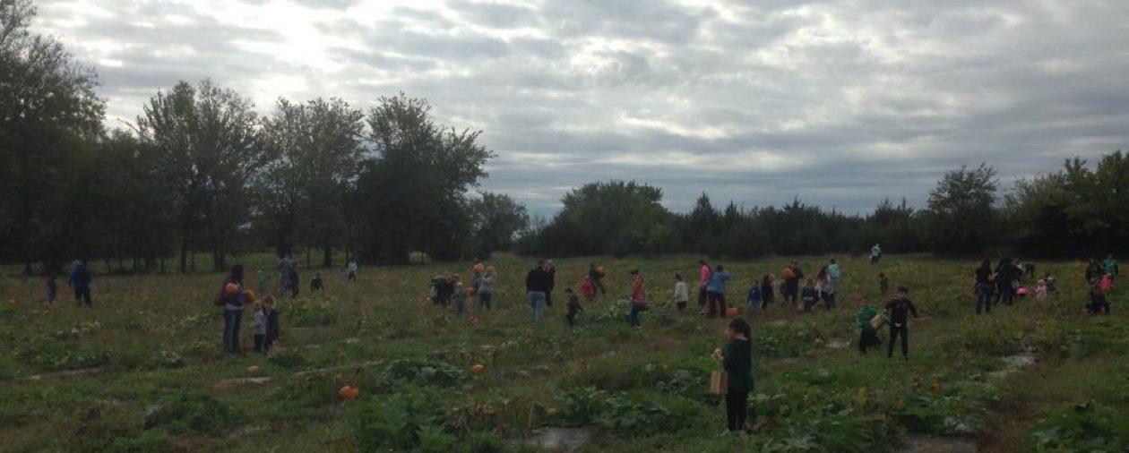 Meadowlark Farm